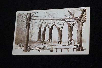 1920s-30s 5 White Tail Deer Hung Up on Tree Hunting Rifles Gun Collectible Photo