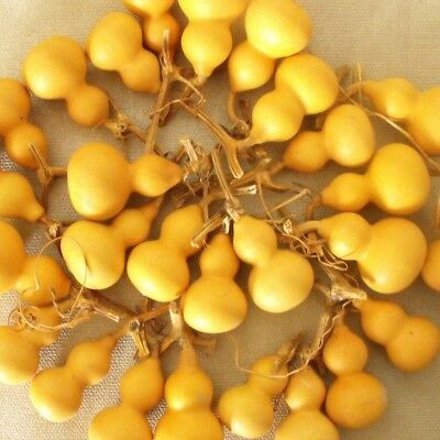 25 Pieces Package of Harvest Small Dried Natural Gourds 4-6.5cm