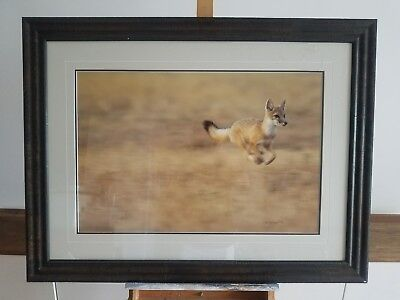 Thomas D. Mangelsen, Signed Like the Wind - Swift Fox ,Limited Edition of 1500