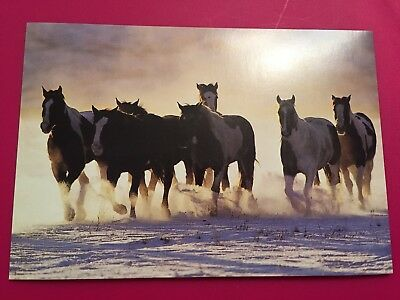 "Leanin' Tree Christmas Card - Theme ""Horses"" Inventory #767"