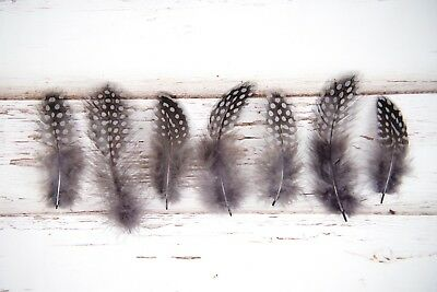Small Natural Spotted Guinea Fowl Feathers - Dark Grey, Black, White  5-11cm UK