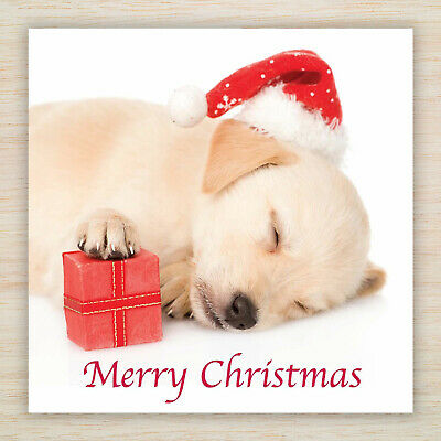 """Cute /""""Cosy Chihuahua/"""" Jumper Dog Puppy FREEPOST Christmas Blank Cards /& Packs"""