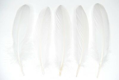 "Large White Goose Quill Feathers 6-8"" weddings, craft, art, dreamcatchers UK"