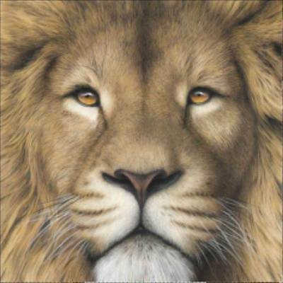 5D Diamond Painting Full Drill Brown Lion Embroidery Cross Stitch Kit Home Decor