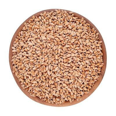 Our Organics Wheat grain 1kg THIS PRODUCT IS NOT GLUTEN FREE