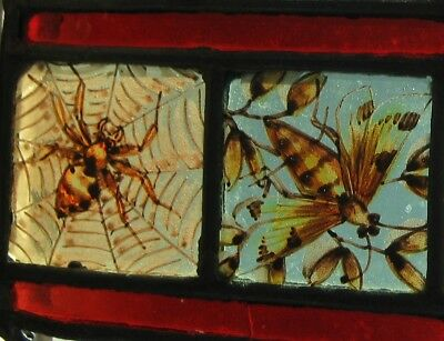 Antique Victorian, Stained Glass Window Section - Spider, Moth, Fish, Mosquito.