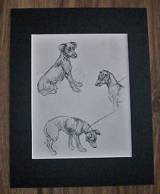 Fox Terrier Pups Dog Print Leashed Up KF Barker 1942 11x14 Bookplate w/Mat