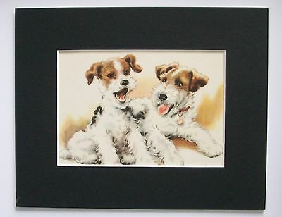 Fox Terrier Pups Dogs Print Winifred Martin Side By Side Bookplate 1950s Matted