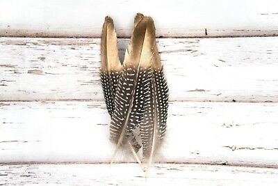 Gold Tipped Natural Spotty Guinea Fowl Wing Feathers Black Grey White 15-20cm UK