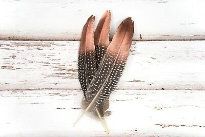 Rose Gold/ Copper Dipped Natural Spotty Guinea Fowl Wing Feathers 15-20cm UK