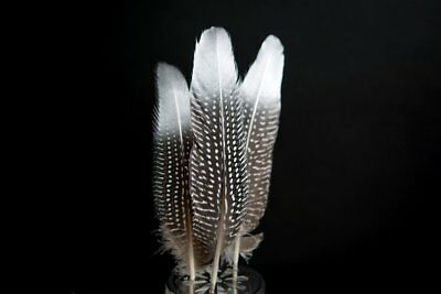 Silver Dipped Natural Spotty Guinea Fowl Wing Feathers - Grey White 15-20cm UK