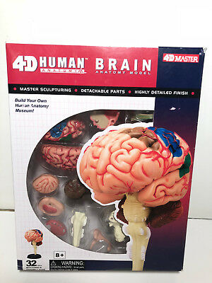 HEART 4D ANATOMY MODEL//PUZZLE Kit #26052  TEDCO SCIENCE TOYS