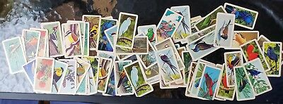 70 Red Rose Tea Brooke Bond Collector Tropical Bird Cards Series 6 & 9 Pre-owned