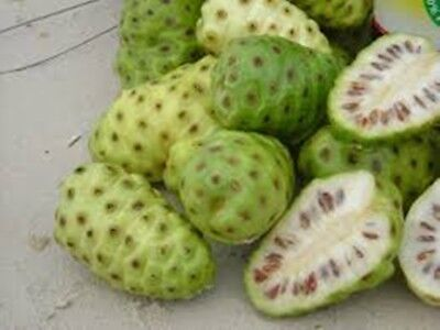 25 seeds/pack Noni Seeds Delicious Fruit Morinda Citrifolia Tree Seed