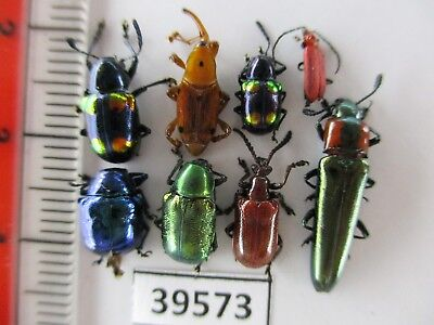39573. Small insects 8mix. Vietnam South*****