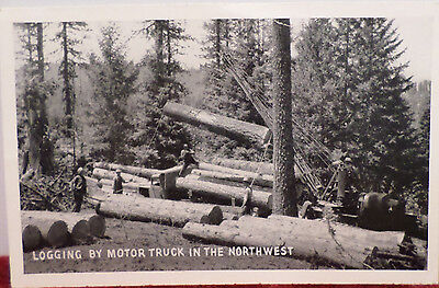 Antique Real Photo Postcard Logging in the Northwest Divided  Unposted USA