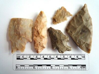 Native American Arrowheads found in Texas x 5, dating from approx 1000BC  (2282)