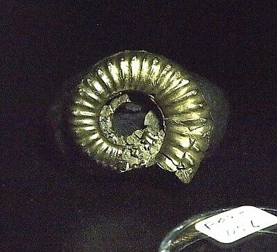 AMMONITE-pyritised Microderoceras inexpectans FOS-D56,39.68ct,.28oz,25x22x8mm