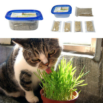 Cat Grass Seeds and Soil Mix Organic for Planting Wheat & Container Health Food