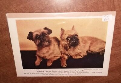 """Willard R. Culver """"Brussels Griffons"""" Book Plate National Geographic photo 1941"""