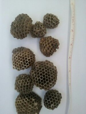 Paper Wasp Nest large Lot of 12 Different, Clean Pieces for School,Taxidermy etc