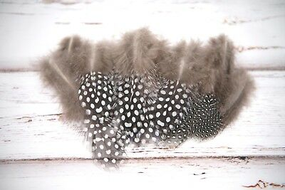 Small Natural Spotted Guinea Fowl Feathers - Grey White Spotted 4-8cm UK Bulk