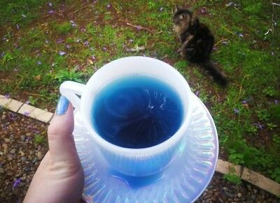 Magic Blue Potion Teabags / butterfly pea flower witch witchcraft healing magick
