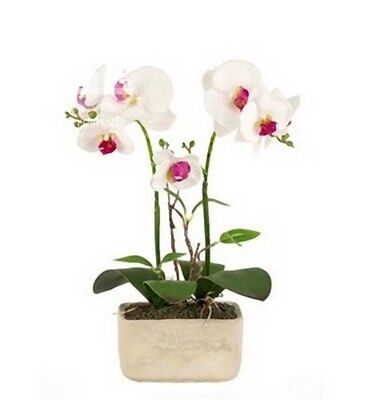 Orchidea Artificiale