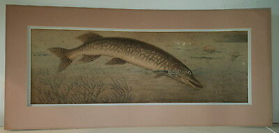 19th century hand etching and hand coloured Pike