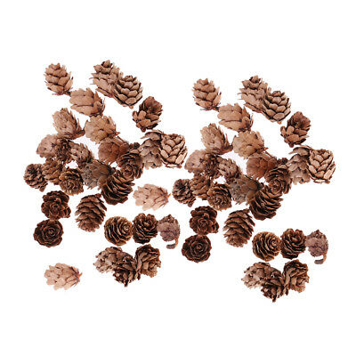 60x Mini Natural Dried Pine Cones In Bulk Dried Flowers for Christmas Decor