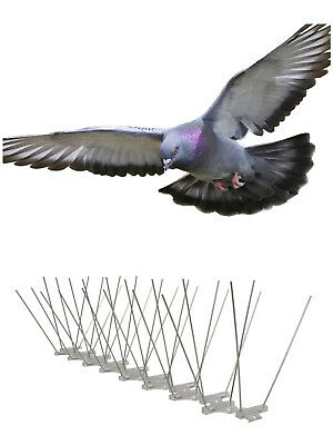 Bird Control Deterrent Pigeon / Seagull Anti Bird Spikes For Wide Ledges