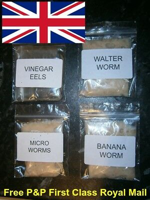 Walter Worm Banana Worms Micro Worm Vinegar Eel Live Fish Food Starter Cultures.