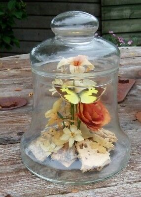 Vintage Glass Bell Shape Jar With Real Butterflies/Flowers - Michael R Curzon