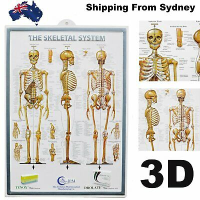 The Skeletal System Poster 3D Human Body System Poster Medical Wallchart 70x50CM