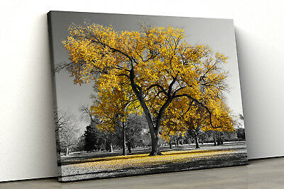 Large Yellow tree black white Home Decor Nature Framed Canvas Print Wall Art 115