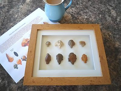 Paleolithic Arrowheads in 3D Picture Frame, Authentic Artifacts 70,000BC (Y002)
