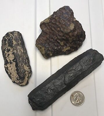 Old Shipwreck Iron From Fort Jefferson, Dry Tortuga's, Florida Keys
