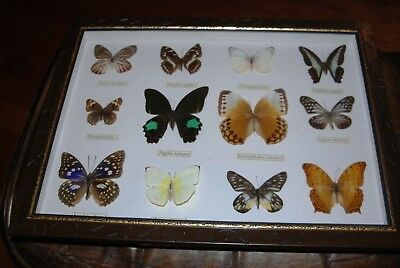 Butterflies Set of Two Framed Collections