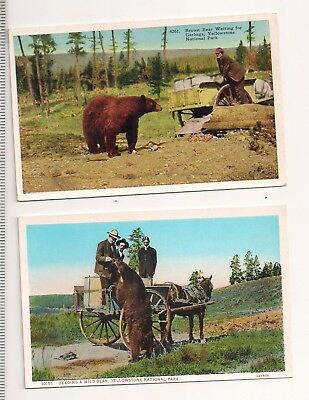 Yellowstone Park - Feeding Bears Vintage Postcards Lot Of 2