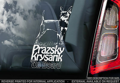 Prazsky Krysavik - Dog Car Window Sticker - Prague Ratter Pražský Krysařík Sign