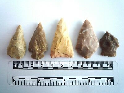 5 x Native American Arrowheads found in Texas, dating from approx 1000BC  (2221)