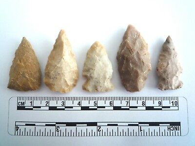 5 x Native American Arrowheads found in Texas, dating from approx 1000BC  (2202)