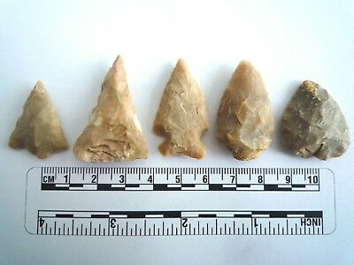 5 x Native American Arrowheads found in Texas, dating from approx 1000BC  (2201)