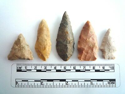 5 x Native American Arrowheads found in Texas, dating from approx 1000BC  (2228)