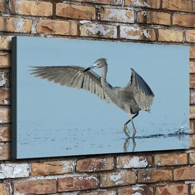 """12""""x22""""Animal Blue Heron HD Canvas prints Painting Home Decor Picture Wall art"""