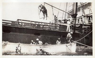 RPPC - Loading Cattle Aboard Ship in Hawaii - Vintage Real Photo Postcard