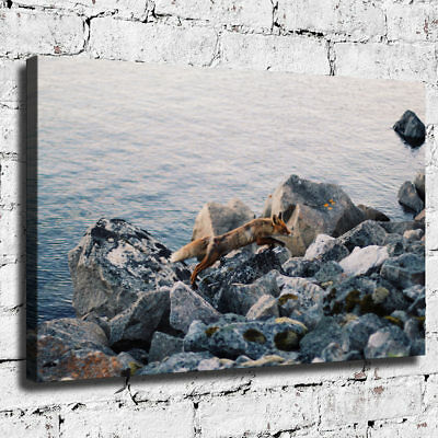 Beach Fox HD Canvas prints Painting Room Home Decor Picture Wall art Poster
