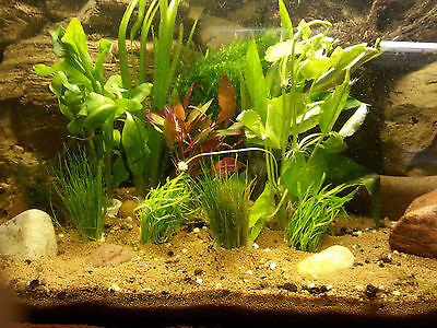 AQUARIUM PFLANZEN SET 10 Bunde