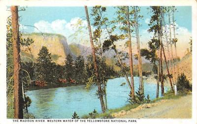 WY, Wyoming    MADISON RIVER~Yellowstone National Park    c1920's Postcard