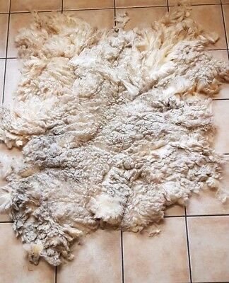 Raw White Fleece Perendale for spinning and crafts 2.652 kg
